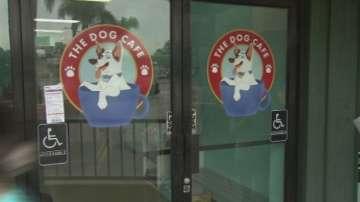 Кафене с кучета отвори врати в Лос Анджелис