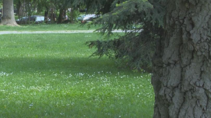 Извънредна обработка на зелените площи в София срещу кърлежи. Тази