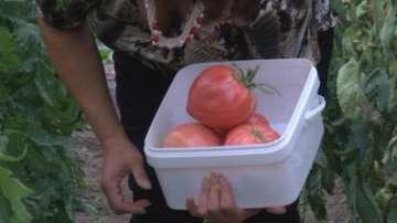 Отбелязваме деня на българския градинар