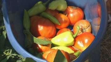 Деца от Пловдив отгледаха зеленчуци и ги продават сами