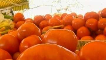 Производители на оранжерийни зеленчуци съдят земеделското министерство
