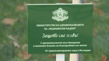Засадиха лирово дърво до НДК в памет на хората, спасили човешки живот