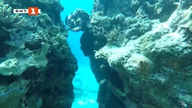 Снимка: ДРУГИТЕ новини: Нов шанс за Големия бариерен риф