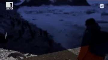 ДРУГИТЕ новини: Метрополис с пингвини