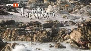 ДРУГИТЕ новини: Спасяват изоставени пингвинчета