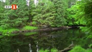 ДРУГИТЕ новини: Какво казват горите