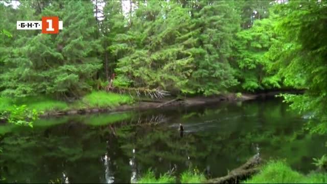 Снимка: ДРУГИТЕ новини: Какво казват горите