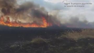 Еколози:Пожарът в Дуранкулашкото езеро е унищожил местообитанието на редки птици