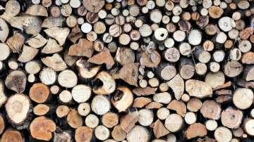 Ще поскъпнат ли дървата в Пловдивско заради мерките срещу АЧС?