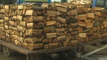 Седем акта за незаконна дървесина са съставени във Варненско през уикенда