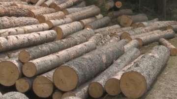 Арестуваха началник на горски участък и лесничей заради търговия с дървесина