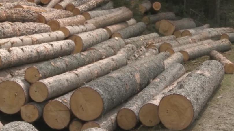 Специализираната прокуратура повдигна обвинения на директора на Държавно горско стопанство