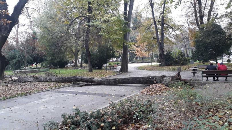голямо дърво падна парка центъра пловдив