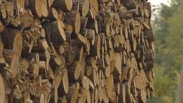 Задържана е крадена дървесина