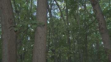 Ще се премахнат ли скоро опасните дървета в Борисовата градина?