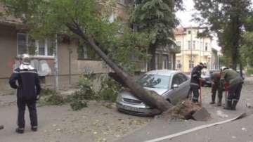 Заради силния вятър дърво падна в центъра на Видин