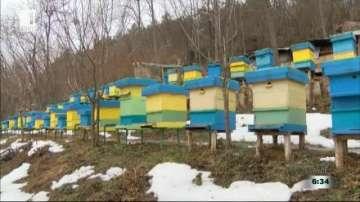 Пчеларите очакват сериозни загуби през следващите месеци