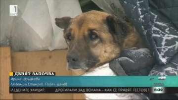 Бездомните кучета и студът. Историята на Бобо