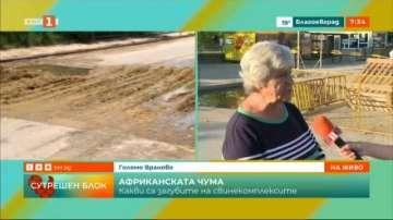 Какви са загубите на свинекомплексите в Русенско?