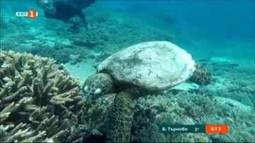 Нов проект за картографиране на кораловите рифове