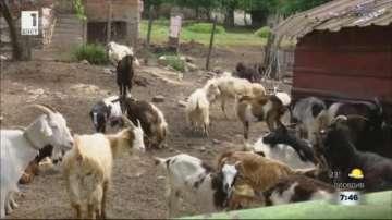 Само 160 животни останаха в село Шарково след масовата евтаназия