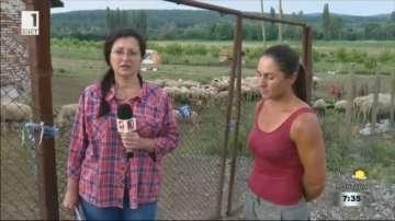 След вторичното огнище в Болярово - фермери се заканват да откажат нови проби