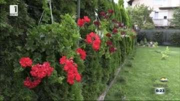 Конкурс за най-красив двор тече в кюстендилското село Жабокрът