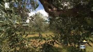 Италиански истории: Как се прави бизнес в Сицилия?