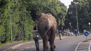 Слон избяга от германска зоологическа градина (ВИДЕО)