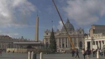 Във Ватикана пристигна коледната елха
