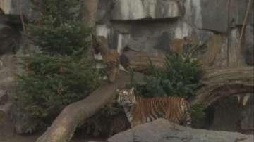 След Коледа: Търговци даряват непродадените елхи на зоопарка в Берлин