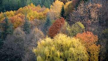 Астрономическата есен настъпи: Какво време ще ни донесе?