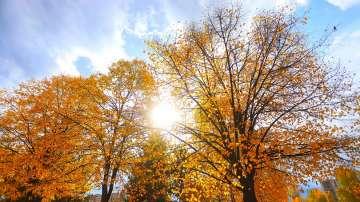 Около и над 15 градуса ще са максималните температури в следващите дни
