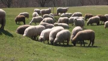 Фермери ще се срещнат с министъра на земеделието, за да обсъдят субсидиите
