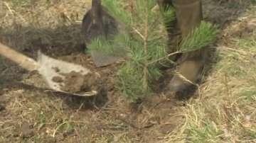Министри ще садят дървета, ако оттеглят точка от дневния ред
