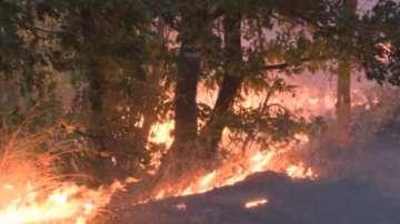 Пожарът край село Българска поляна не застрашава хората и къщите им