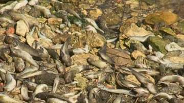 Огромно количество умряла риба край Варна