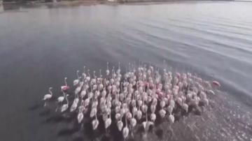 Турското езеро Ван е обиталище на 234 видове птици