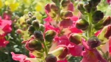Забравените цветя от градината на баба са най-търсени