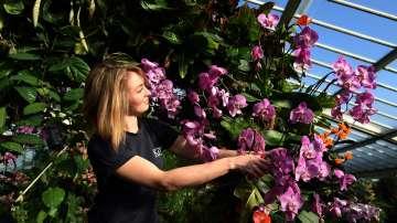 38 000 тона цветя изнася Колумбия за САЩ по случай Свети Валентин