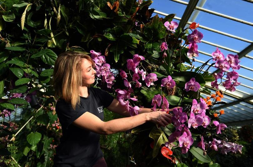 38 000 тона цветя - звучи невероятно, но приблизително толкова