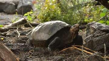 Извънредно положение на архипелага Галапагос заради петролен разлив