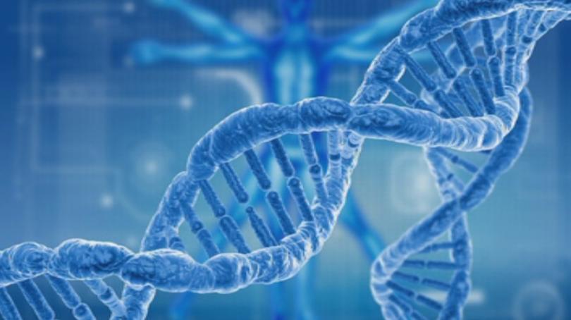 Мащабно изследване разкрива динамиката на 70 белтъка, участващи в поправката