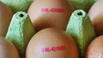 По следите на замърсените с инсектицид яйца в Европа