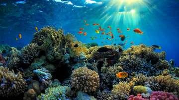 Австралия с фонд за опазване на Големия бариерен риф