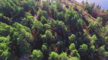 Зелена светлина: Енергия от дървесинни отпадъци