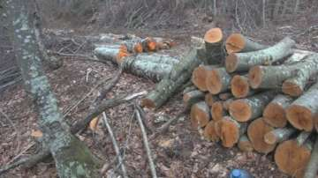 Инж. Мирослав Джупаров е назначен за директор на агенцията по горите