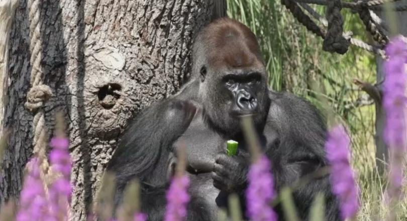 снимка 1 Жегата във Великобритания мъчи обитателите на зоопарка в Лондон