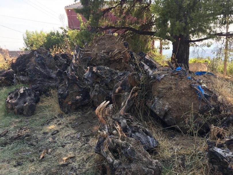 снимка 3 Продължават пожарите на остров Евбея