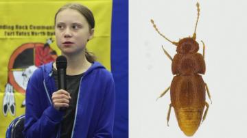 Кръстиха бръмбар на Грета Тунберг